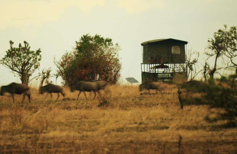Luxury Safari Exped to Serengeti national park Tanzania