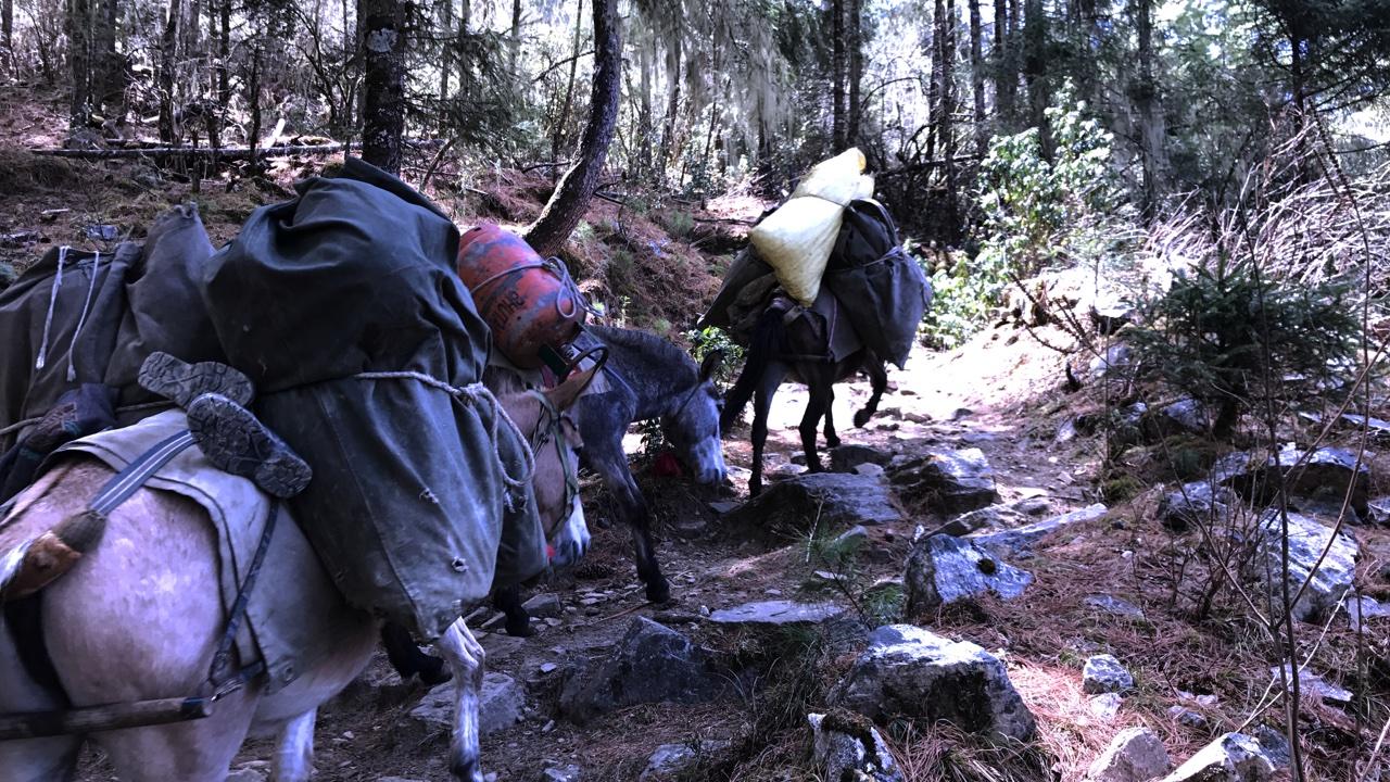 Expeds Druk Path Trek Bhutan
